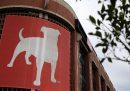 Zynga ha comprato la società turca di videogiochi Peak per 1,8 miliardi di dollari