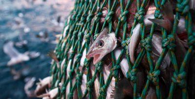Guida al pesce che mangiamo