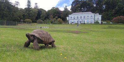 L'animale terrestre più vecchio del mondo