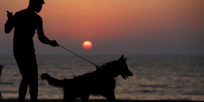 L'Islam non ha mai apprezzato i cani, ma qualcosa potrebbe cambiare
