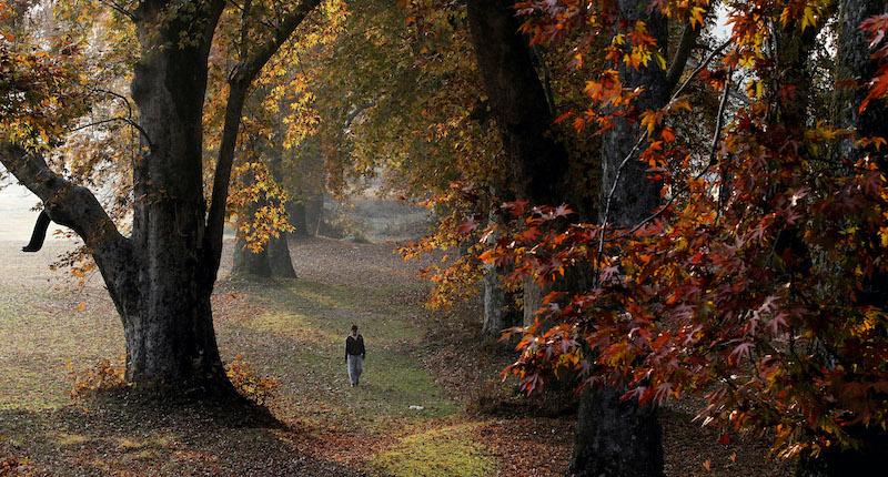 Perché in autunno cadono le foglie