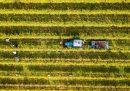 Come si fa l'economia circolare col vino