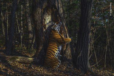 La foto che ha vinto il Wildlife Photographer of the Year