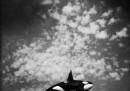 Balene e fantasmi
